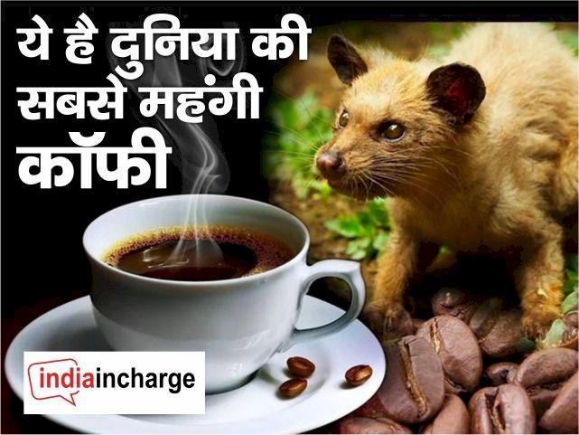 बिल्ली की पॉटी से बनती है ये दुनिया की सबसे महंगी काफी, जल्द मिलेगी भारत में, जानिए इसकी खासियत
