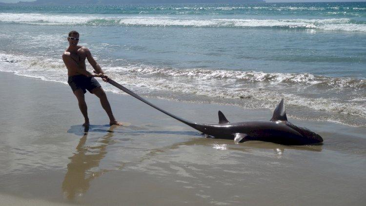 मछुआरे के जाल में फंसी 'म्यूटेंट शार्क, पेट फाड़ा तो रह गया दंग इंसान की शक्ल के निकले बच्चे, देखें तस्वीर