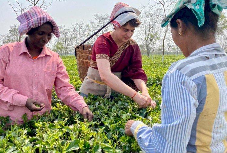 Assam Assembly Elections 2021 : चुनाव से पहले असम दौरे पर प्रियंका, मजदूरों के साथ तोड़ी चाय पत्तियां