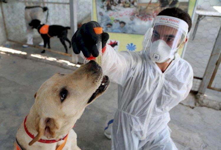 कुत्ते सुंघ कर लगाएंगे कोरोना व कैसर मरीजो का पता, GADVASU लुधियाना में मिलेगा प्रशिक्षण